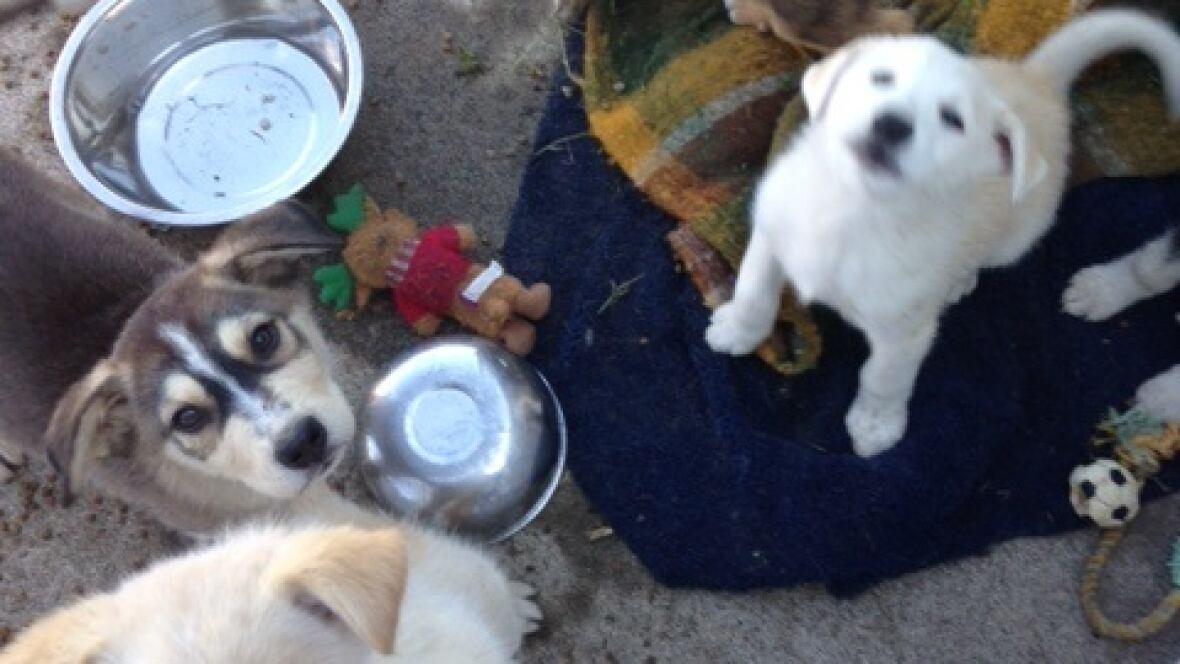 Humane Society Dogs For Adoption Ontario