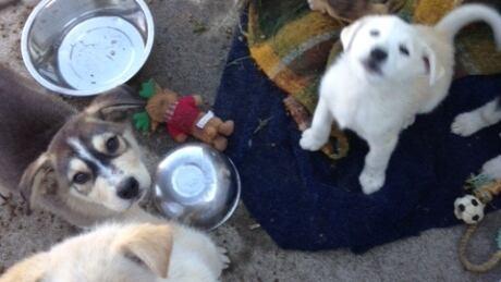 Fort Frances Dog Adoption