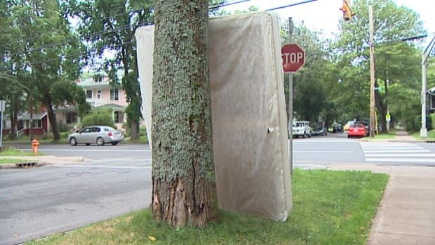 An old mattress leans against a Halifax tree Wednesday.