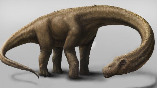 The dinosaur Dreadnoughtus weighed 59,300 kilograms and measured 26 metres long. It was an herbivore that likely spent much of its life eating massive quantities of plants to maintain its enormous body size.
