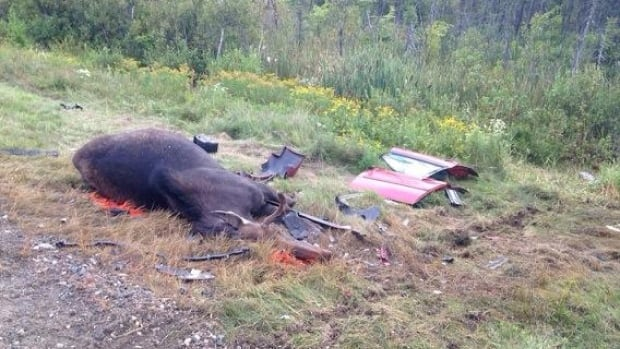 An accident involving a moose on Highway 11 Thursday night near Saint-Louis-de-Kent killed two adults.