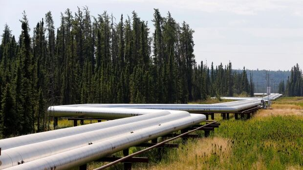 Pipelines carrying steam to wellheads and heavy oil back to the processing plant line the roads and boreal forest 120 km south of Fort McMurray, Alta. Researcher Peter Potapov said the oil and gas industry is largely responsible, directly and indirectly, for fragmenting intact forests in both Canada and the Russian region of West Siberia.