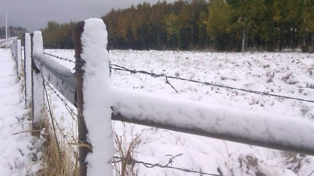 Southern Alberta farmers say the early snow could cost them millions of dollars.