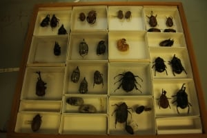 Beetles at the University of Guelph