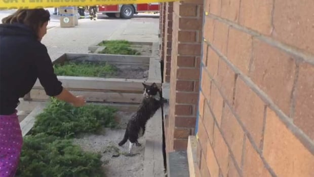 Cat escapes from hotel