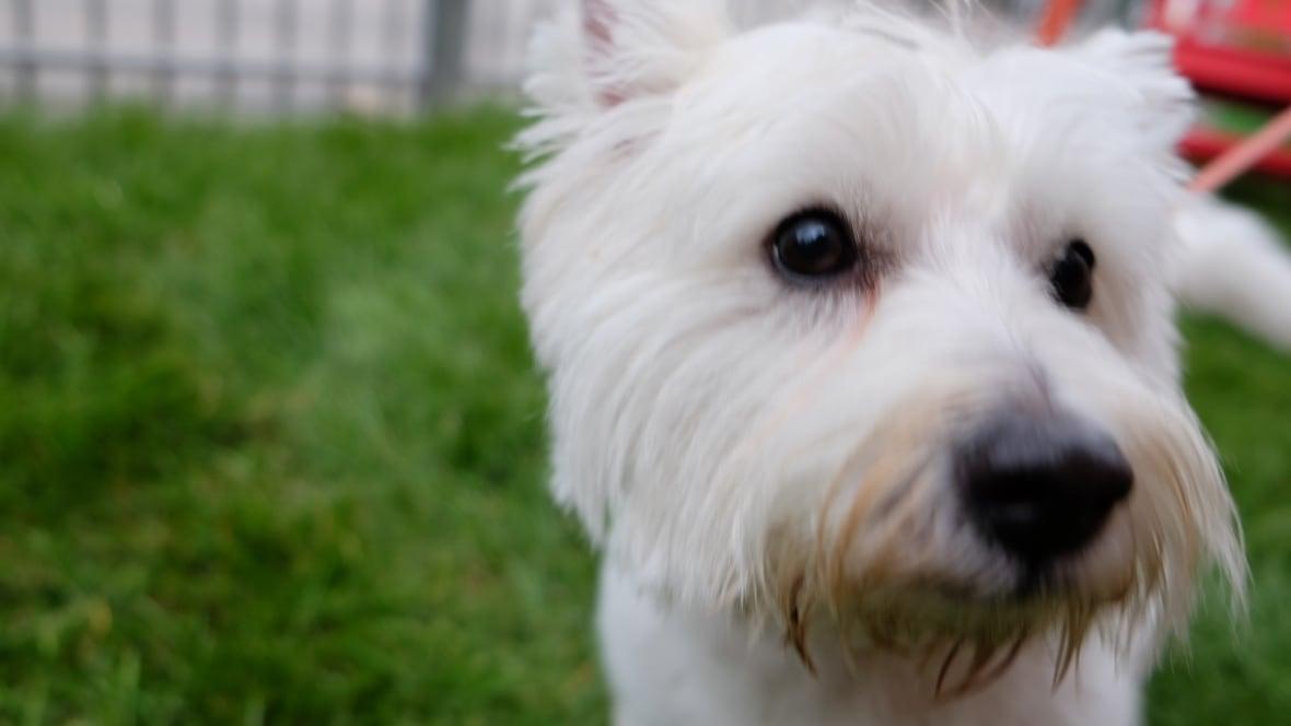 New Off Leash Dog Park Winnipeg