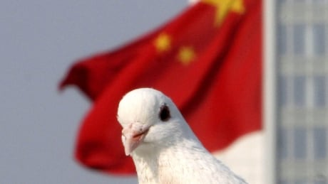 China frisks 10,000 pigeons for butt bombs