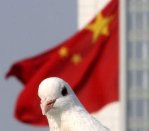 The Chinese Are Bonkers China-pigeon