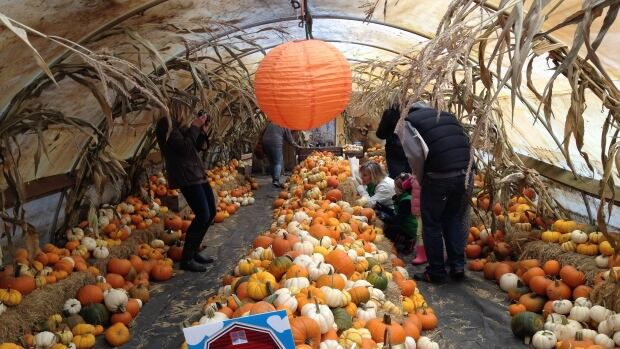Thousands of pumpkins and squashes of every imaginable variety are available to you at  Prairie Gardens & Adventure Farm this month.