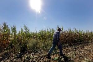 Food and Farm - Farm Defense