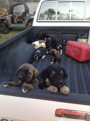 Puppies found in field near Glaslyn