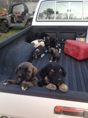 Abandoned puppies get a lift from hunter