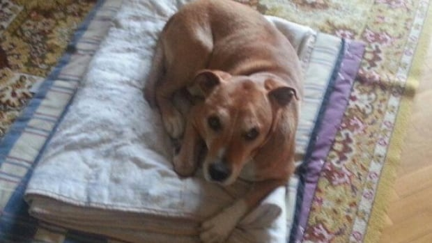 This dog, named Excalibur, which is owned by Javier Limon and his wife, a nurse assistant who got infected with Ebola in Madrid, has been ordered euthanized.