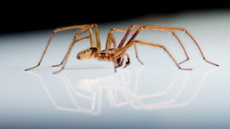 Creepy-crawlies seeking warm winter homes keep pest control expert busy