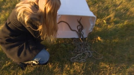 snakes released salthaven