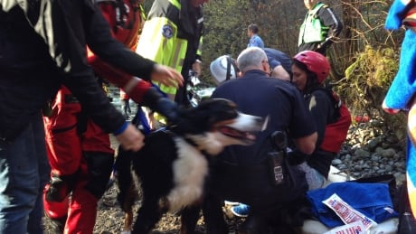 Woman rescued after jumping into turbulent Lynn Creek to save her dog