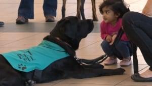 kid meets dog