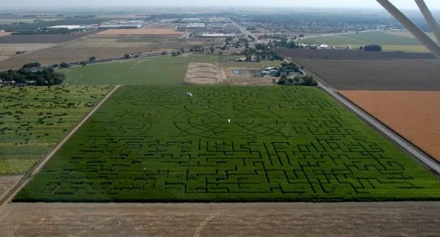 World's biggest corn maze
