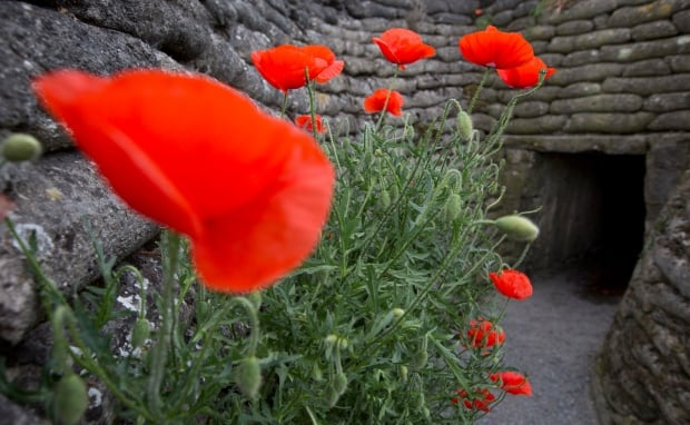 Britain Remembrance Poppies