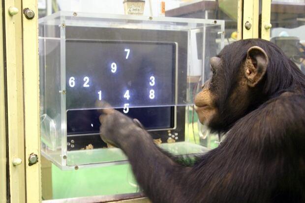 APTOPIX Animal Science