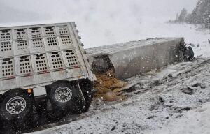crash involving cattle, white river, ont.