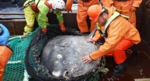 Sunfish - Pacific Ocean temperatures