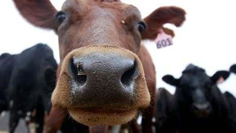 Food and Farm Organic Milk