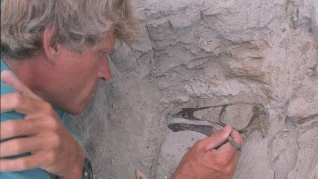 University of Alberta paleontologist Philip Currie excavates an ostrich-like dinosaur in Dinosaur Provincial Park, Alta., in 1995.