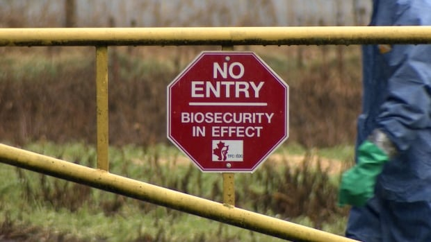 Farms affected by the avian flu outbreak are under tightened biosecurity measures.