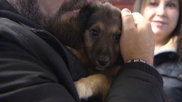 Regina Humane Society Dogs For Adoption