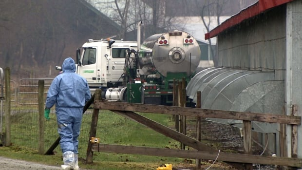 Workers in bio-security suits are culling more than 150 thousand birds at seven Fraser Valley poultry farms.