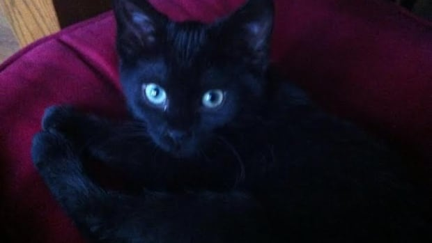 A recent photo of Luna, who died yesterday after ingesting Christmas tree needles.