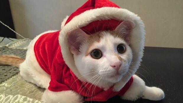 The Kittens Lookie Lookie We Find Him Guilty
