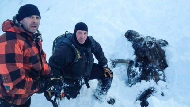 In this photo published in the Alaska Times Dispatch, Rob Uphus and Marty Mobley pose with a moose they found buried in an avalanche.