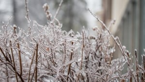 Ottawa freezing rain