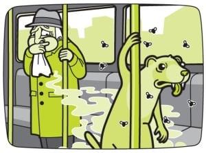 funky ferret + lounge lizard