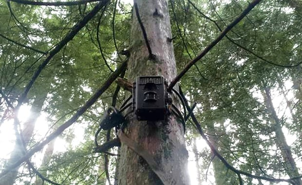 North Shore trail camera