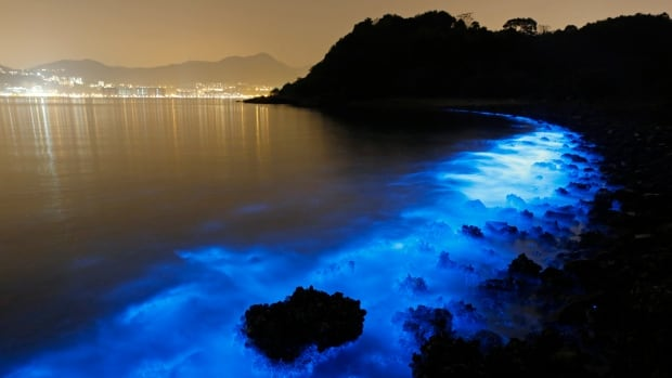 Eerie fluorescent blue patches of water glimmering off Hong Kong's seashore are caused by a single-celled organism called Noctiluca scintillans, nicknamed Sea Sparkle.