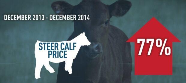 Alberta calf prices