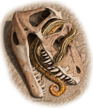 Diablophis gilmorei snake