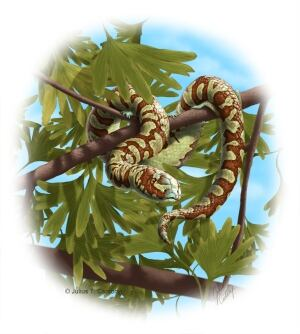 Portugalophis lignites snake fossil