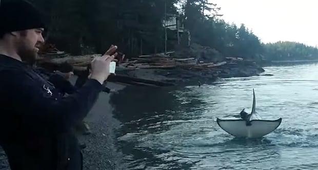Whales rubbing on beach