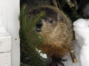 Groundhog Day 20110202