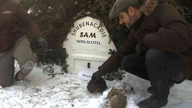 Handlers greet Shubenacadie Sam on Monday in Shubenacadie, N.S. The Groundhog Day perennial saw his shadow when he emerged from his burrow, forecasting six more weeks of winter.