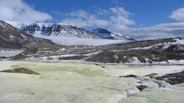 The unique Ellesmere Island glacier was discovered by Steve Grasby and Benoit Beauchamp about 25 years ago. The two were struck by its unusual yellow colour, caused by a sulphur spring, as they flew overhead.