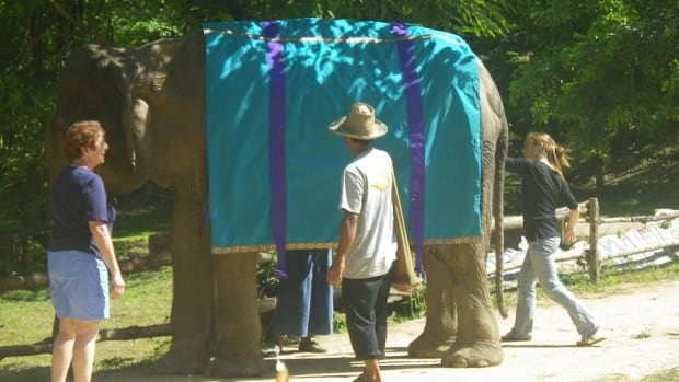 An elephant wears a coat, similar to the one offered to the Edmonton Valley Zoo for Lucy.
