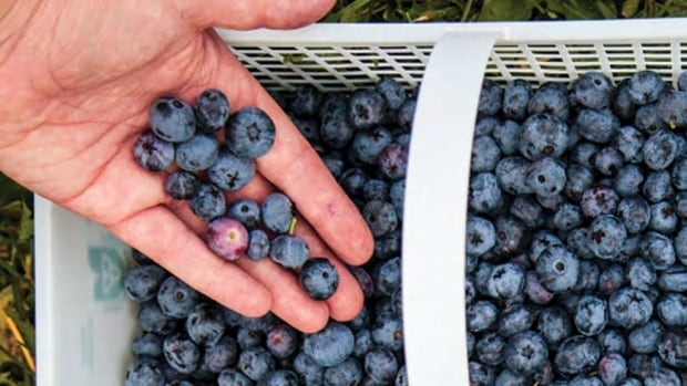A study from a McMaster University economics professor says Ontario can produce more jobs and benefit the environment by increasing the local food supply.