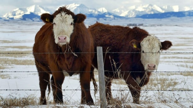 South Korea has reopened its markets to Canadian beef, 10 months after mad cow disease was found in a beef cow from Alberta.