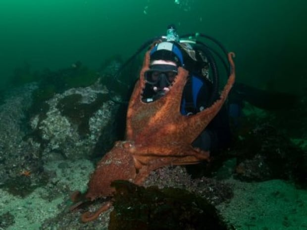 giant-pacific-octopus-hug.jpg