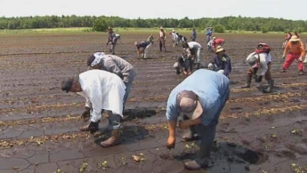 Temporary foreign workers are often used in agriculture and fishing industries.